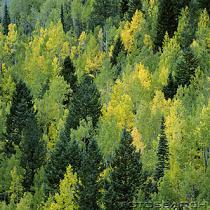 Arbres à feuilles caduques